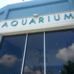 Aquarium of Niagara