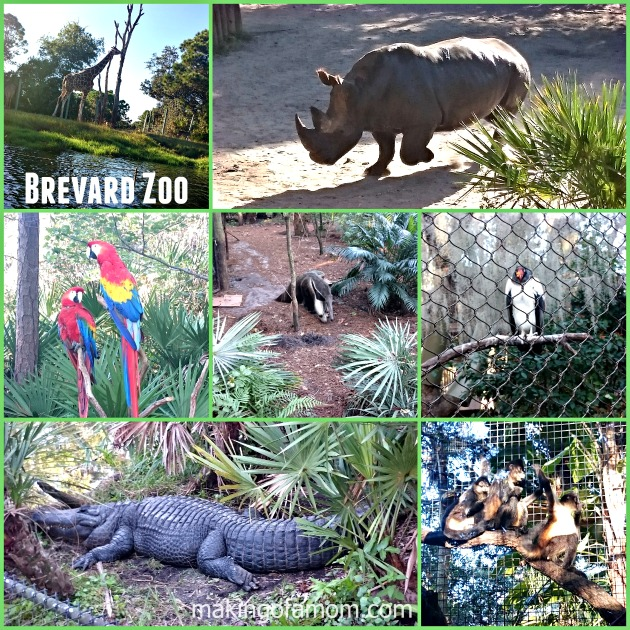 Brevard-Zoo-Animals