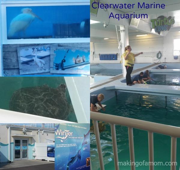 Clearwater-Aquarium-Turtles