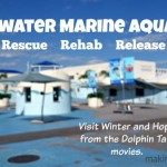 Visiting Clearwater Marine Aquarium