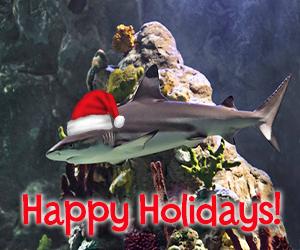 santa shark SLKC