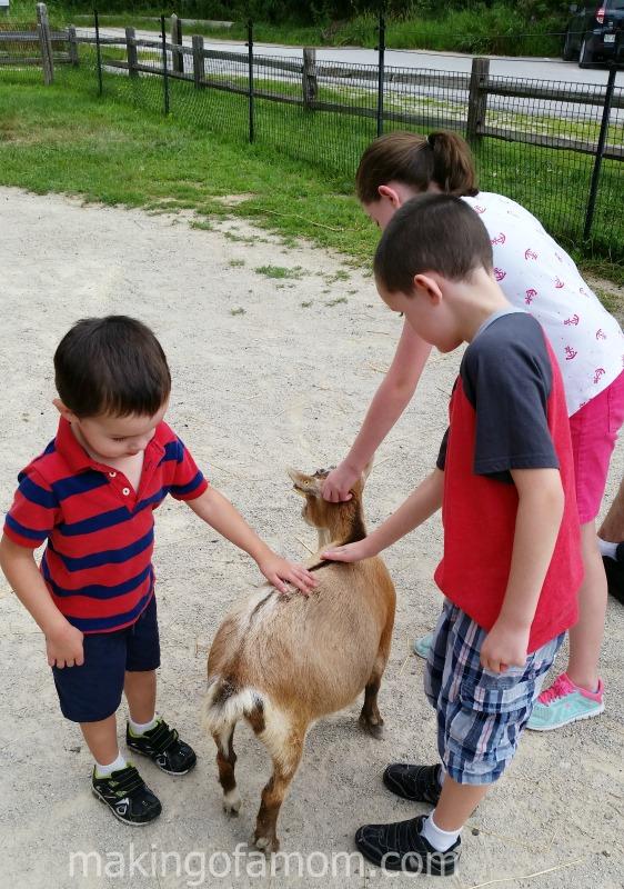 Waildlife-Park-Goat