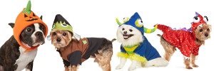 MS Pets overlap collage