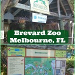 Adventure Awaits You at the Brevard Zoo – Melbourne, FL