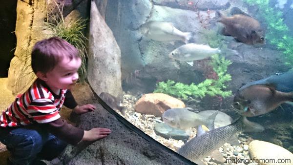 Sea-Life-KC-Fish-Tank