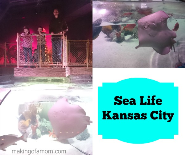 Sea-Life-KC-Rays-Pool