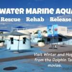 Visiting Clearwater Marine Aquarium