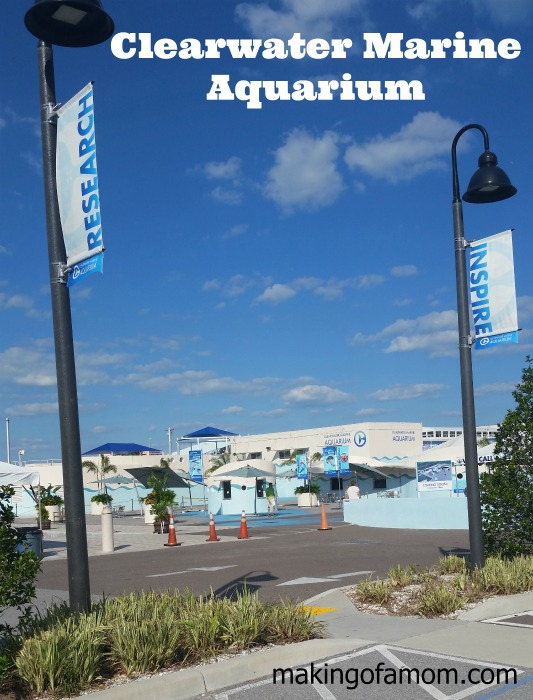 Clearwater-Marine-Aquarium