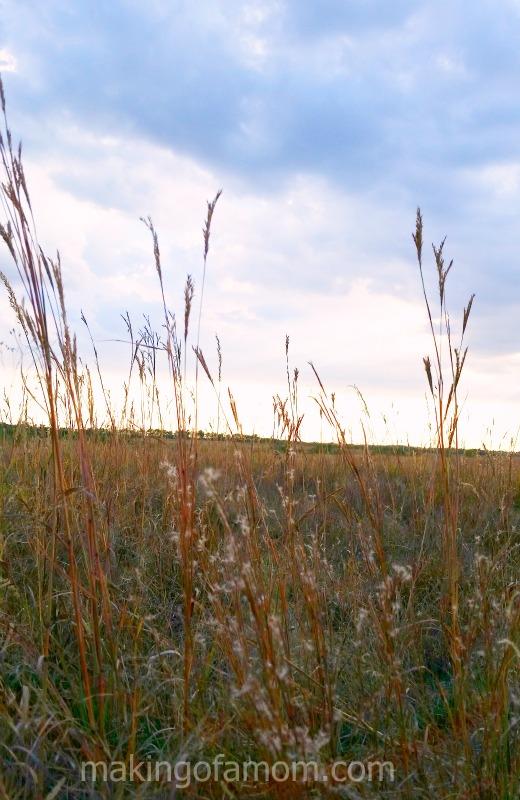 Kansas-Field