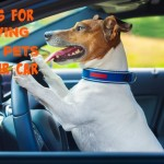 5 Tips for Driving with Pets in Your Car