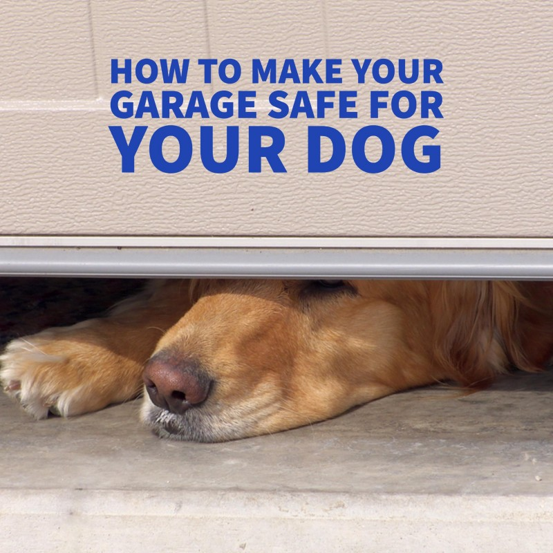 How to Make Your Garage Safe For Your Dog - IG